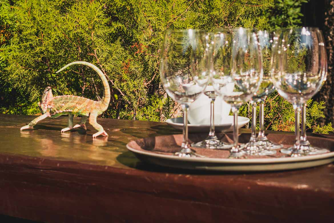 This photo was shot during a wine tasting in Bansko Bulgaria. Sampling exquisite Bulgarian wine is one of the top things to do in Bansko apart from skiing. There is a lizard walking around empty wine glasses.