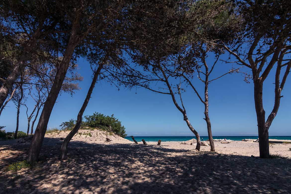 This is photo of Spiaggia degli Alimini. There are tall trees right on the white sand which create thick shade.