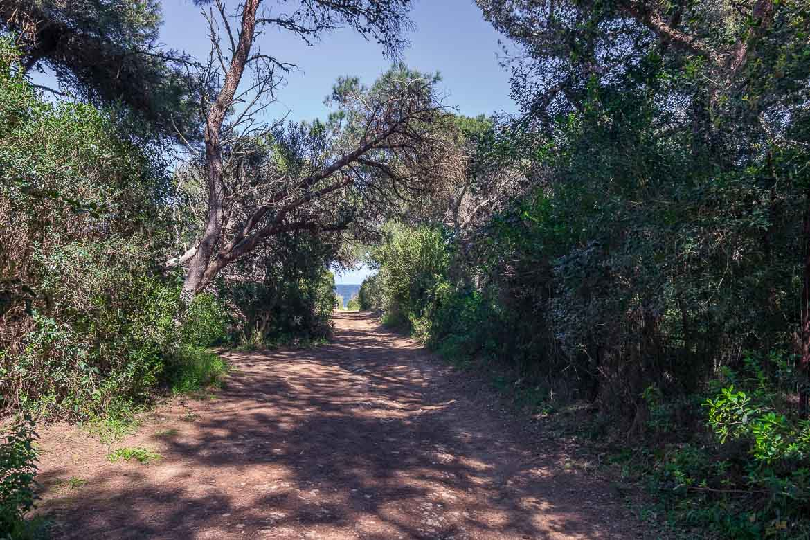 This is a photo of a path that leads to the beach through the forest.