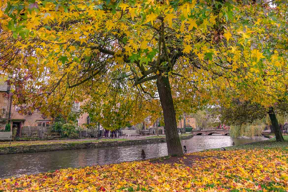 This is an image of the river at Bourton-on-the-Water. There is a beautiful big tree that sheds its leaves on the river bank.