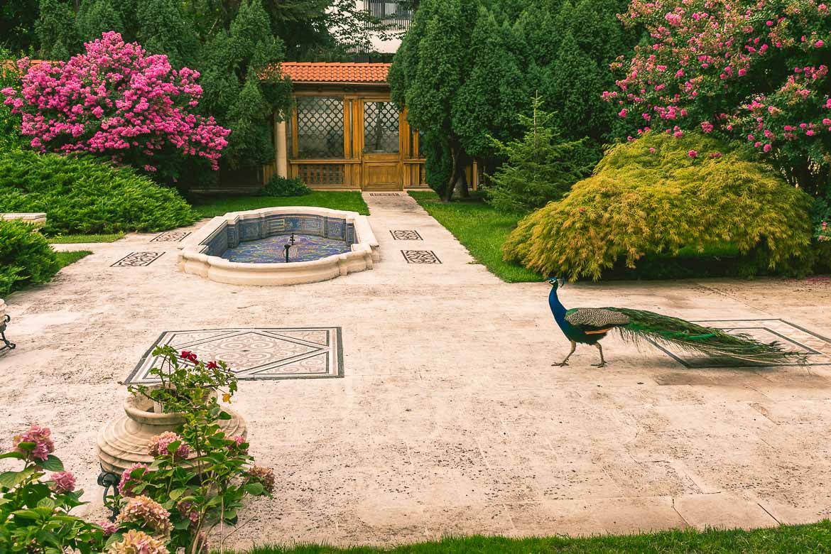 This photo shows a beautiful peacock wandering in the garden at Casa Ceausescu, Bucharest, Romania.