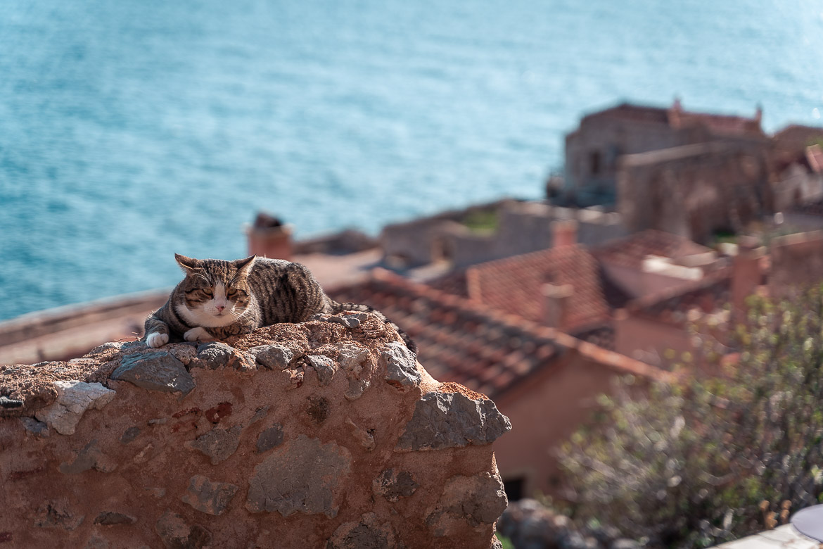 This image shows a super cute cat resting on a wall with gorgeous architecture in the background.