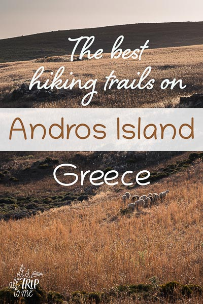 This image shows a field of gold with a herd of sheep in Andros Greece. This is an optimised image for Pinterest. There is overlay text that reads: The best hiking trails on Andros Island Greece. If you like this article, please pin this image!