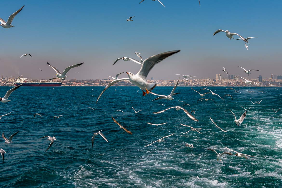 This is an image of countless seagulls following the ferry in the Sea of Marmara. The city of Istanbul can be seen in the background.