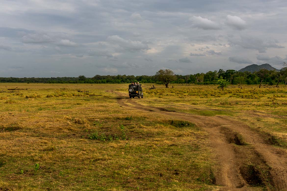 This is a panoramic view of Minneriya National Park. There is a jeep driving on the grass and there are trees bordering the open space near the tank.