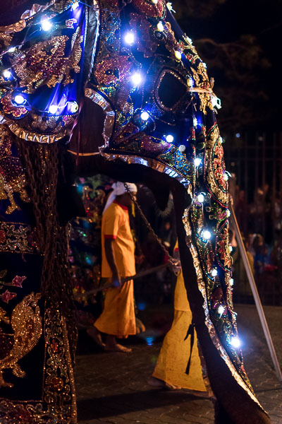 This photo shows an elephant dressed up for the procession of the Perahera festival. The animal is even wearing decorative lights on its body.