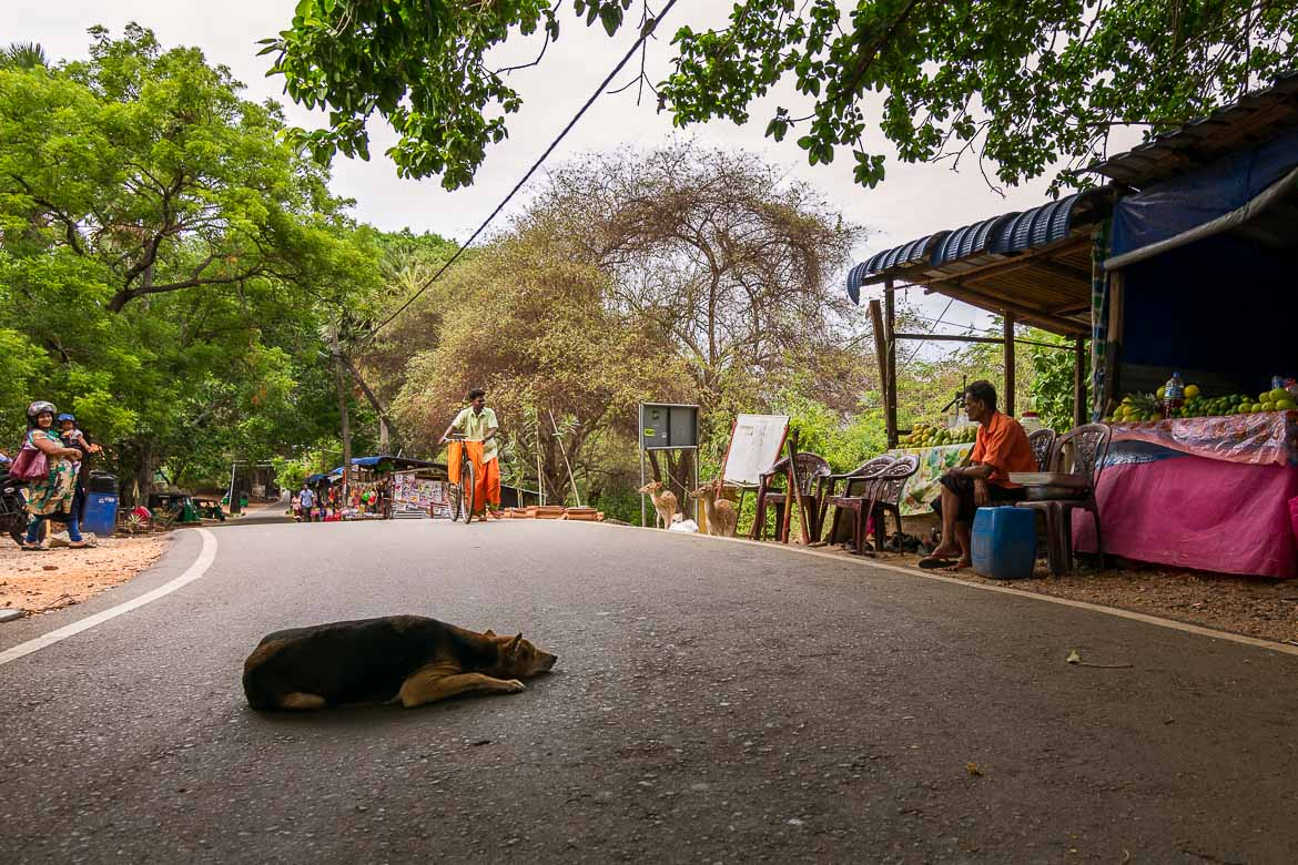 This is a photo of a stray dog taking a nap at the middle of the street in Sri Lanka.