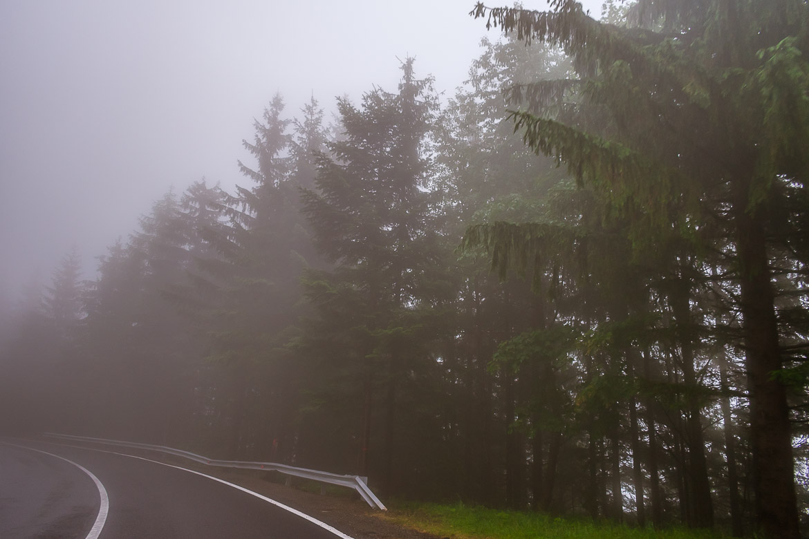 This photo was taken during our Transfagarasan road trip. There are tall trees at the side of the road. Almost everything is covered in fog.