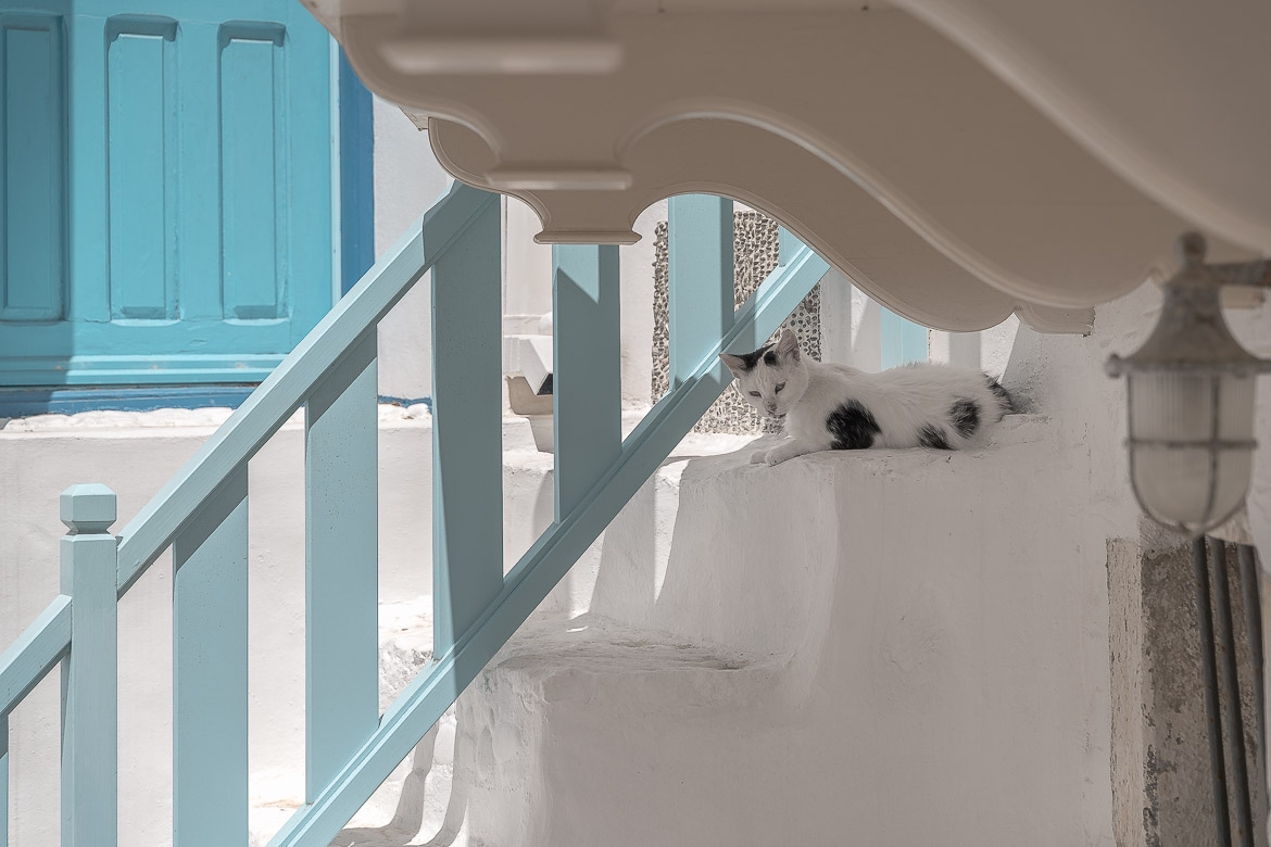 This is a close up of a white and black cat sitting at the whitewashed steps of a building in Chora.