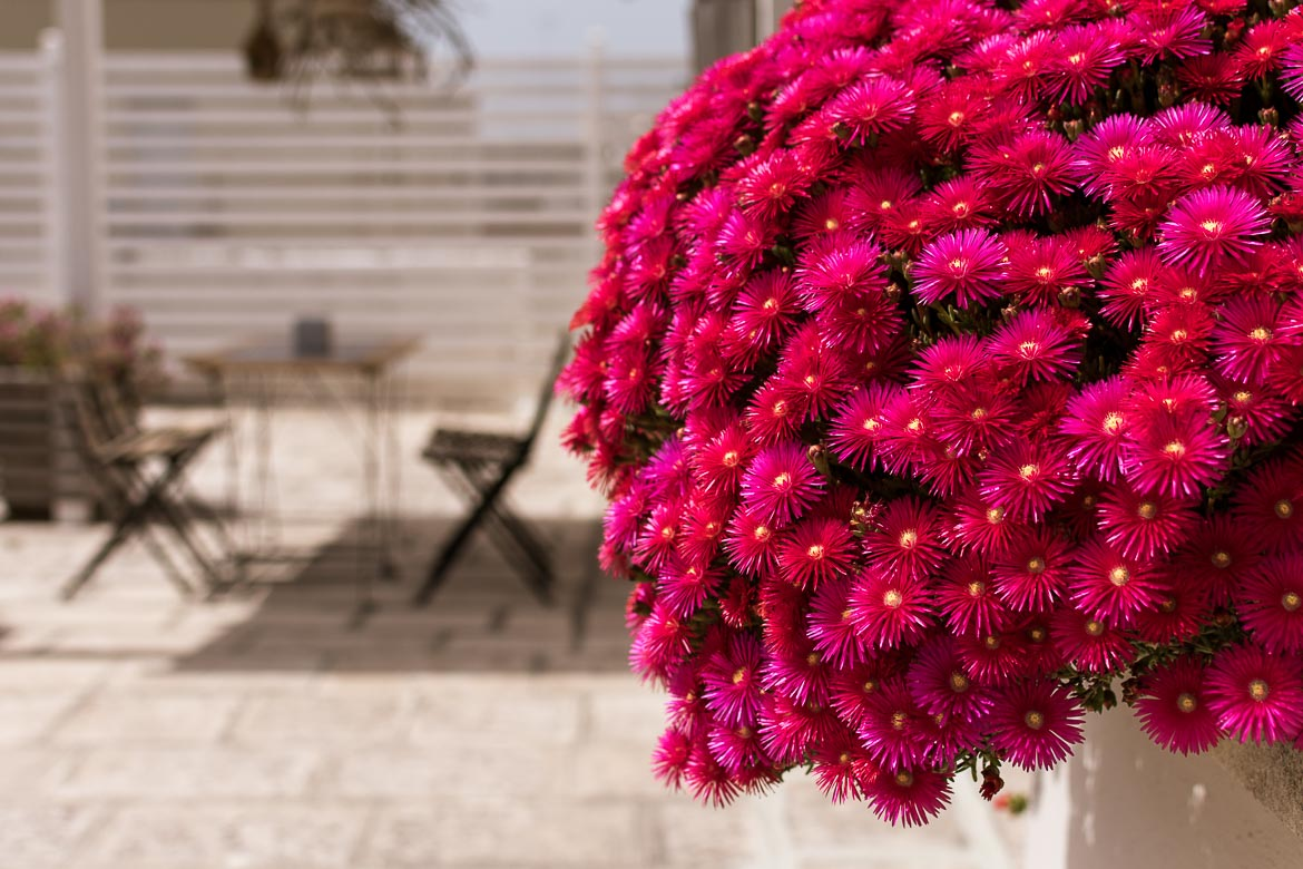 This is a close up of brightly coloured flowers at the terrace at Palazzo Bignami. In the background, a table with chairs with bokeh effect.