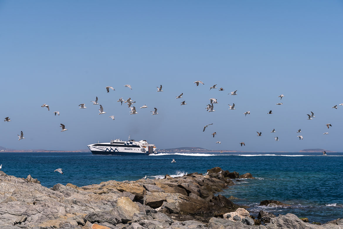 This image shows a highspeed ferry. Seagulls fly in the foreground.