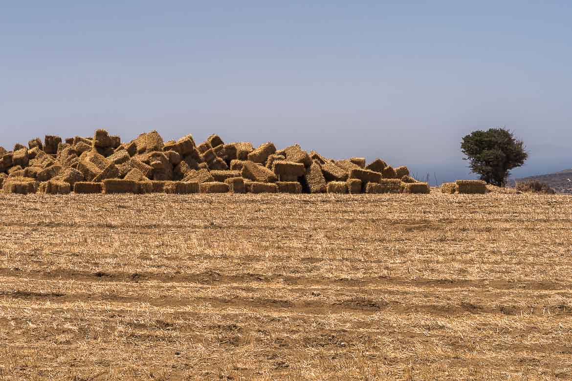 This image shows the rural landscape of Naxos. There is a pile of hays and a tree.
