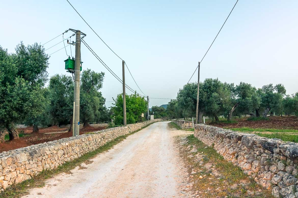 This photo shows a white dirt road in the Italian countryside.