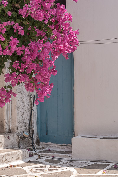 This is a close up of a blue door with a fuchsia bougainvillea hanging over it.