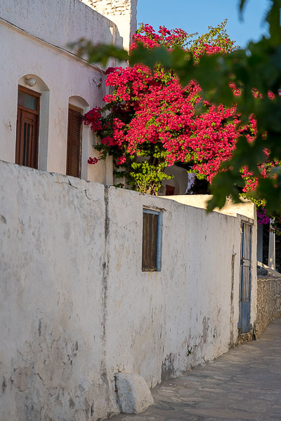 This is a close up of an impressive white mansion in Artemonas. There is a brightly coloured bougainvillea next to it.
